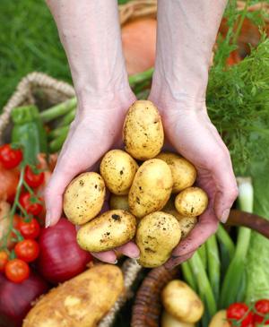 Зеленчуците свалят кръвното