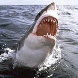 Вещество в акулите убива всички вируси