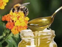 Пчеларство – пчелни продукти и производството им. Пчелен прашец, пчелно млечице, пчелен мед, пчелен восък, пчелни отводки, пчелни кошери – обяви, фирми, търговци и производители